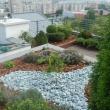 Avant'Garden