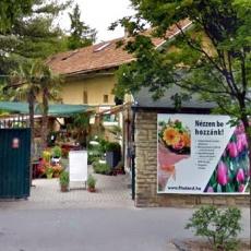 FitoLand Kertészet - Belváros (Forrás: google.hu)