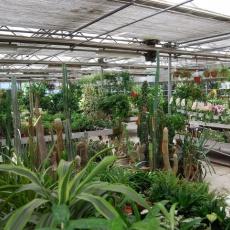 FitoLand Kertészet - Belváros